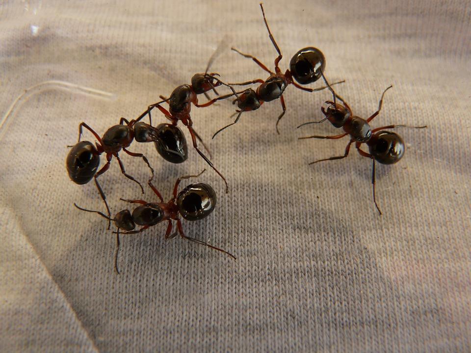 Come liberarsi delle formiche in casa - Come debellare le formiche in casa ...