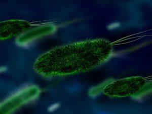 bacteria-106583_960_720